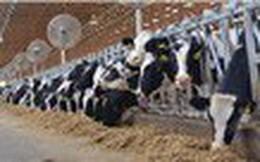 Thị trường sữa thế giới phục hồi