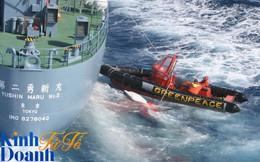 Ngăn Nhật đánh bắt cá voi, chống Mỹ thử bom nguyên tử, tổ chức hoạt động vì môi trường này khiến cả thế giới ngưỡng mộ