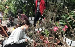 Thực hư đào mini Trung Quốc ngập chợ Việt hét giá tiền triệu