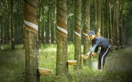 Đẩy mạnh thanh lý cây cao su, Phước Hòa (PHR) báo lãi 637 tỷ đồng năm 2018, có gần 1.400 tỷ đồng tiền gửi ngân hàng