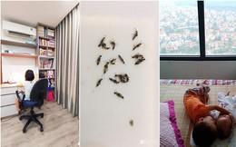Các gia đình ở Hà Nội chia sẻ những mẹo nhỏ nhưng vô cùng hiệu quả giúp nhà bạn tránh xa kiến ba khoang