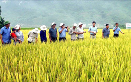 Lộc Trời (LTG) đạt 292 tỷ lãi ròng 9 tháng đầu năm, tăng 24% chủ yếu nhờ mảng thuốc bảo vệ thực vật thuận lợi