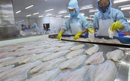 FSIS chính thức công nhận hệ thống kiểm soát cá tra của Việt Nam tương đương Mỹ