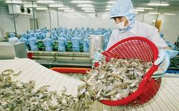 Chuyện tôm Việt muốn rộng đường vào Mỹ, châu Âu và mục tiêu 10 tỷ USD xuất khẩu