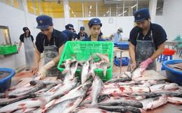 Xuất khẩu cá tra sang các thị trường chính tăng mạnh