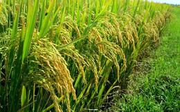 Khởi đầu năm, ngành nông nghiệp khó khăn cả về thị trường lẫn giá