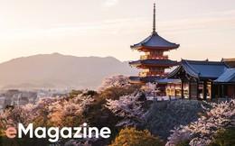 Vẻ đẹp tỷ USD của hoa anh đào Nhật Bản