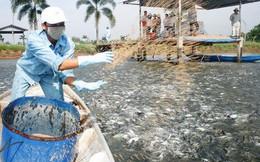 Thủy sản Nam Việt (ANV) đặt mục tiêu LNST tăng 16% lên 700 tỷ đồng