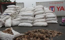 Bắt hơn 8 tấn vảy tê tê tại cảng Hải Phòng lớn nhất từ trước đến nay