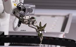 Robot trồng rau đưa cuộc sống viễn tưởng vào đời thực