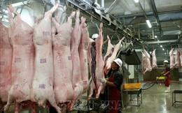"""Cấp đông thịt lợn: Doanh nghiệp không mặn mà vì đầu tư """"khủng"""", rủi ro lớn"""
