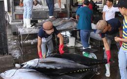 ATIGA: Cơ hội lớn nhưng đầy thách thức cho các doanh nghiệp xuất khẩu cá ngừ Việt Nam