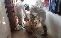 2,4 triệu con lợn phải tiêu hủy, nguồn cung khan hiếm