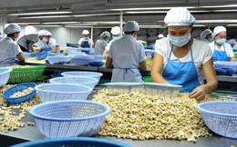 Xuất khẩu hạt điều sang Trung Quốc tăng đột biến