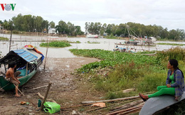 Mùa nước nổi về trễ, người dân An Giang mất nguồn thu