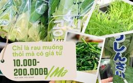 Rau muống ở Việt Nam rẻ bằng cốc trà đá, ra nước ngoài đắt không tưởng