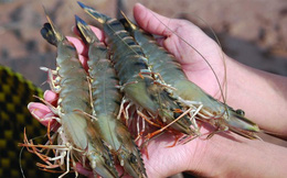 """Hàng trăm tấn hải sản mắc kẹt vì Trung Quốc """"siết"""" thủ tục hải quan"""