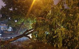 Hàng loạt cây xanh bật gốc, đường ngập sâu khi bão số 3 ập vào Móng Cái