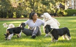 Tập duy trì thói quen buổi sáng của Oprah Winfrey trong 1 tuần, tôi nhận ra sống lành mạnh không hề dễ dàng nhưng HIỆU QUẢ, rất đáng để thử!