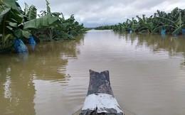 """Thêm một cái """"hạn"""" chưa từng có HAGL Agrico (HNG): 1.500 ha trái cây sắp thu hoạch tại Lào đang bị ngập lụt nặng nề"""
