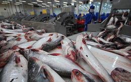 Thuận lợi và rủi ro với cá tra Việt Nam năm 2019
