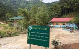 Bên trong khu sinh thái 'xẻ thịt' đất rừng Sóc Sơn sau lệnh cưỡng chế