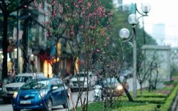 Chùm ảnh: Hoa đào đã nở đỏ rực trên những tuyến phố Hà Nội, Tết đã đến rất gần rồi!