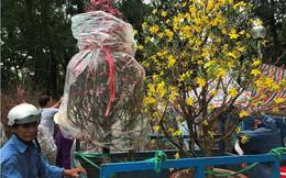 Kiếm tiền triệu mỗi ngày từ chở thuê ở chợ hoa ngày cận Tết