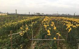 Rau xanh, hoa tươi ở Hà Nội rớt giá thê thảm sau Tết