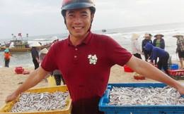 Ngư dân Quảng Bình cười tươi 'hơn tết' nhờ trúng mùa, trúng giá cá trích