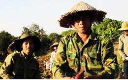 Nông dân Gia Lai lao đao vì không tìm được đầu ra cho khoai lang Nhật
