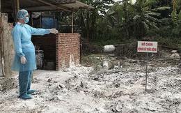 Dịch tả lợn châu Phi lan rộng: Vào ổ dịch đầu tiên tại Hà Nội