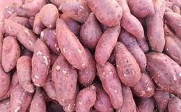 """""""Giải cứu"""" khoai lang: Bà con ồ ạt trồng, giá khoai lao dốc 1.000-3.000 đồng/kg"""