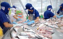 """Giá cá tra tại Đồng bằng sông Cửu Long """"đảo chiều"""""""