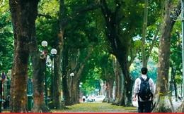 Đẹp ngỡ ngàng mùa sấu thay lá đổ vàng rực cả con đường lãng mạn nhất Hà Nội