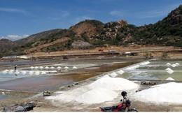 Muối trúng mùa trúng giá, diêm dân Ninh Thuận bội thu