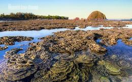 Ngỡ ngàng trước vẻ đẹp của vườn hoa san hô lộ thiên ở Phú Yên