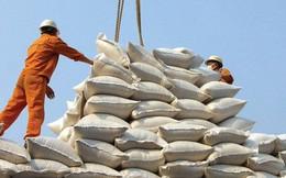30 năm xuất khẩu gạo và vai trò ổn định thị trường của Chính phủ
