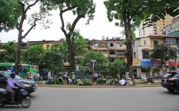 """Hàng trăm nghìn cây cảnh """"lấp chỗ trống"""" trên đường Kim Mã"""