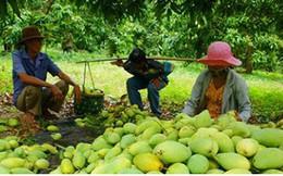 Nhiều tín hiệu vui cho xuất khẩu trái cây Việt Nam