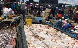 Đồng Nai: Hàng trăm tấn cá phơi bụng trên sông