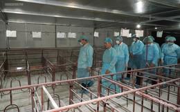 Thủ tướng kiểm tra, đôn đốc công tác phòng, chống dịch tả lợn châu Phi