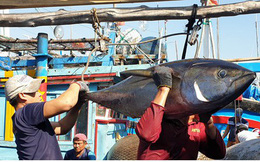 Cấp hạn ngạch để đảm bảo đánh bắt cá ngừ đại dương bền vững