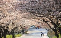 Vì sao Hàn Quốc thay đổi chính sách visa với công dân VN?