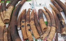 Công an Hải Phòng truy tìm chủ nhân hơn 7 tấn ngà voi và vảy tê tê