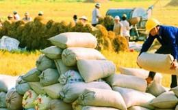 """Được tháo """"gông"""", xuất khẩu gạo vẫn chưa thoát đà suy thoái"""