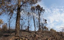 Tan hoang rừng thông Hà Tĩnh, tro than bay mịt mù sau 3 ngày hỏa hoạn