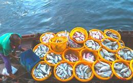 Mãn nhãn tại cảng cá lâu đời ở đảo ngọc Phú Quốc