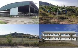 Trại bò nghìn tỷ liên quan ông Trần Bắc Hà giờ thành vườn chuối