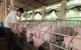 Lợn chết 3,3 triệu con giá vẫn giảm mạnh, dân 2 lần lỗ đau